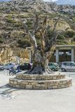 Matala carving. Famous hippie tree in the center of Matala city , Crete , Greece , Europe Stock Images