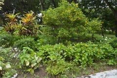 Matanao,南达沃省,菲律宾的市政霍尔的前提的栽培植物 免版税库存照片