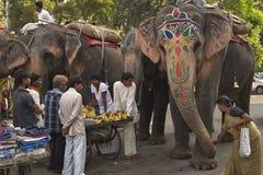 Matande elefanter i Indien arkivbild