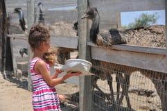 Matande emu för barn på Ostrichland i Solvang Kalifornien Arkivfoto