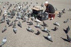 Matande fåglar för gammal ensam kvinna i mitten av storstaden matande duvor Matande duvor för äldre kvinna på Arkivfoton