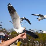Matande fåglar vid händer Arkivfoto