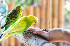 Matande fåglar vid handen Royaltyfri Bild