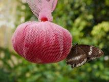 Matande fjäril Arkivbilder