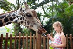 Matande giraff för familj i zoo Barn matar giraff i tropisk safari parkerar under sommarsemester Ungeklockadjur little royaltyfria foton