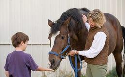 matande häst för pojke royaltyfri foto