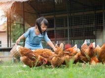 Matande hönor för lycklig liten flicka i lantgården Bruka husdjur, mummel arkivfoto