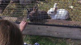 Matande kaniner för flicka på utomhus- arkivfilmer