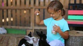 Matande kaniner för gullig barnflicka från händer lager videofilmer