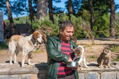 Matande mat för turist för katter i Ephesus Turkiet Royaltyfria Bilder