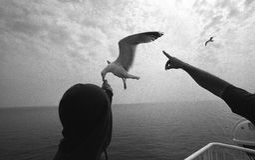 matande seagull Royaltyfria Bilder