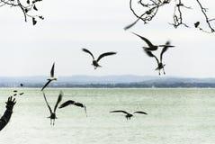 Matande seagulls Fotografering för Bildbyråer