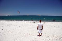 matande seagulls Royaltyfri Foto