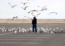 matande seagulls Arkivbilder