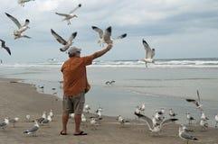 matande seagulls Royaltyfri Fotografi