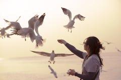 Matande seagulls för en kvinna vid hennes händer fotografering för bildbyråer