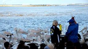 Matande show för pelikan på ingången royaltyfria bilder