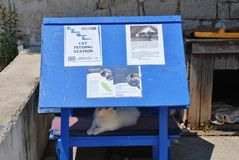 Matande station för katt, Paxos Royaltyfri Bild