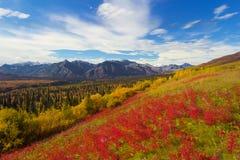 Matanuska冰川看法在秋天的与红色花 免版税库存图片