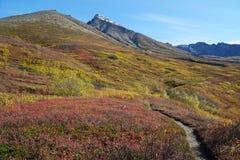 Matanuska Peak royalty free stock photography