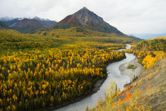 Matanuska River Flows utumn Season Fall Color Alaska Royalty Free Stock Image