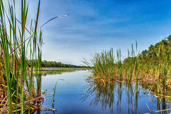 Matapica Swamp Stock Photography