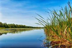 Matapica Swamp Royalty Free Stock Photo