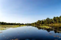 Matapica Swamp Stock Image
