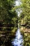 Matapica Swamp Stock Photo