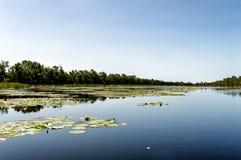 Matapica Swamp Royalty Free Stock Image