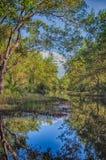 Matapica Swamp Stock Images