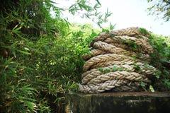 Matassa della corda in boschetti Immagini Stock