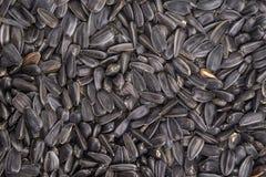 Matbakgrund från svart frö av solrosen Royaltyfri Fotografi