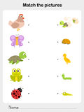 Match animal - Worksheet for education Royalty Free Stock Images