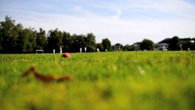 Match de cricket banque de vidéos