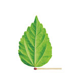 Match with green leaf Royalty Free Stock Image