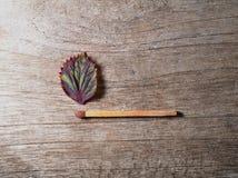 Match mit einem Streifenblatt auf h?lzernem Hintergrund lizenzfreie stockfotos