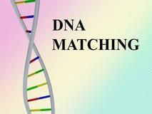 Matcha för DNA - genetiskt begrepp Royaltyfri Bild