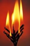 Matchbook Flower. Using a matchbook as a flaming flower Stock Photo