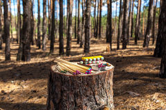 Matches trees forest. Matches are on a stump in the forest trees and matches deforestation different types of matches Stock Photo