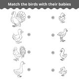Matching game for children, farm birds and babies Royalty Free Stock Image