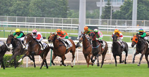 Matching of horse racing Stock Images