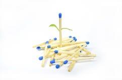 Matchstick in gekomen blad Stock Foto