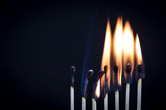 Matchstick Row Royalty Free Stock Photography