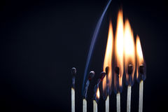 Matchstick Row Royalty Free Stock Image