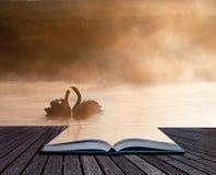 Mated parar av swans på den dimmiga dimmiga höstnedgång laken   Royaltyfri Foto
