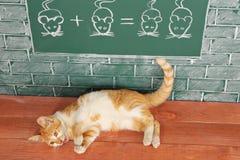 Matematica del gatto Fotografia Stock Libera da Diritti