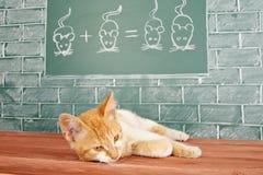 Matematica del gatto Fotografie Stock