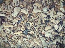 Materiële de fotovoorraad van de tweekleppige schelpdierentextuur Royalty-vrije Stock Afbeelding