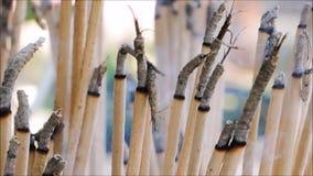 Materiał filmowy dym od wiązki kadzidło przy świątynią w Tajlandia zdjęcie wideo